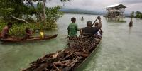 Gathering mangrove firewood, Solomon Islands. Photo by Wade Fairley
