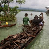 Gathering mangrove firewood, Solomon Islands. Photo by Wade Fairley